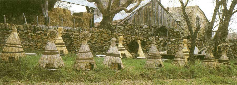 la ruche traditionnelle en paille les textes de mon moulin. Black Bedroom Furniture Sets. Home Design Ideas